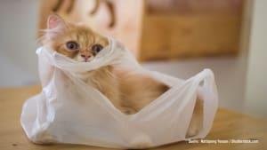 Tüten, Schubladen & Schränke: Echt gefährlich für dein Haustier