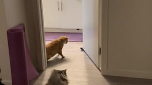 Two Cats Gets Spooked by Sock