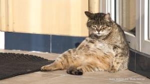 Katzen im Sommer: So schützt du dein Haustier