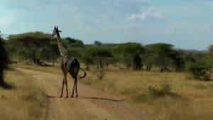 Take a look at what life is like in the Serengeti
