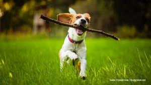 Stöckchen holen! DARUM tut dein Hund es