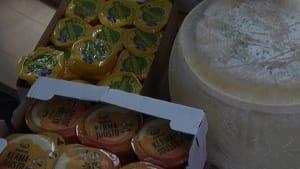 Illegal nach Russland eingeführt: 40 Tonnen EU-Käse