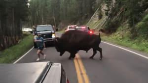 Mann provoziert Bison und bereut es sofort
