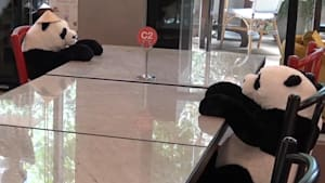 Restaurant uses stuffed pandas to maintain social distancing