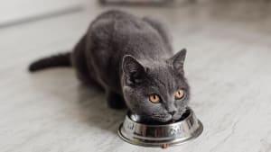 Auf dieses Lebensmittel solltest du bei der Fütterung deiner Katze verzichten