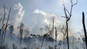 Amazonas: So viele Brände wie seit 2007 nicht mehr
