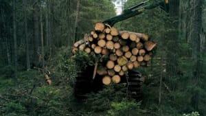Europa verliert Waldbiomasse