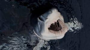 Fund von kopflosem Hai deutet auf Existenz von totgeglaubtem Steinzeit-Tier hin