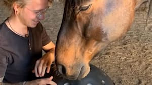 This horse is completely entranced by the handpan