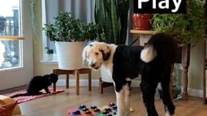 Intelligent dog can communicate with her family