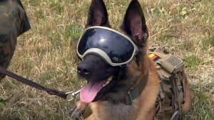 [CDATA[Den richtigen Riecher: Bundeswehr-Hunde als Corona-Spürnasen]]
