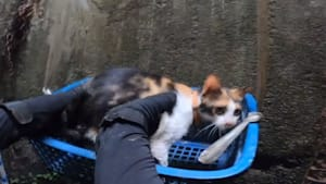 A rescue team rappelled down a well to rescue a trapped cat