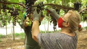 Süditalien: Obst ohne Ausbeutung