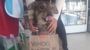 Hund mit Krebs: Seine Tierärztin hat eine geniale Idee, um ihn zu retten