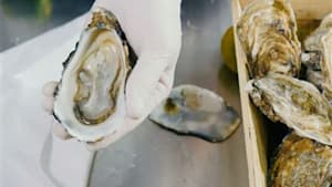 Deshalb solltest du immer wissen, wo deine Austern herkommen...