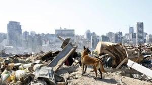 Schwierige Suche nach Überlebenden in Beirut - Rund 100 Vermisste