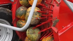 Incredible machine easily harvests pumpkin seeds right from the patch
