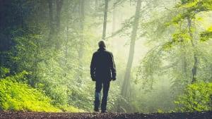 Fünf Jahre nach seinem Verschwinden: Mann wird unversehrt im Wald gefunden