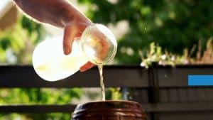 Tipps gegen Unkraut - ohne Chemie