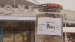 Löwenkot in Marmeladengläsern