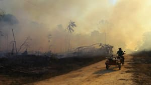 Amazonas-Regenwald: Kapitän Kettensäge rodet weiter