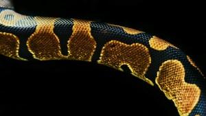 Schlange mit Fehlbildung erstaunt Ranger in Australien