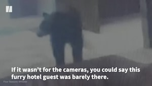 Black Bear Pays Quick Visit To B.C. Hotel
