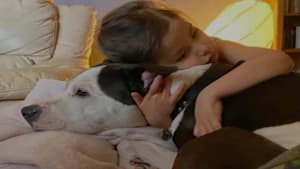 How Canadians Can Help Their Pets Cope With Separation Anxiety