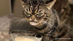 """Neue """"Grumpy Cat"""" macht ihrem Ruf alle Ehre"""