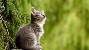 Für die Katz? Regierungskoalition in Polen vor dem Aus