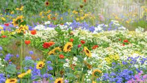 Diese Pflanzen in deinem Garten helfen bei Mückenstichen (Video)