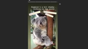 Prinzessin Eugenie ist die Namenspatronin eines Koalababys