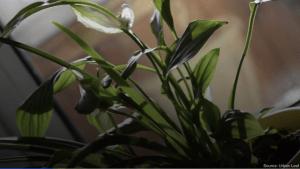Es wird dunkel: So überstehen Zimmerpflanzen Herbst und Winter