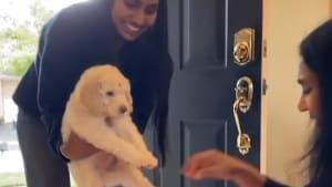 Simba is welcomed home like a prince