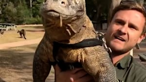 Australian zookeeper shows the cute side of Komodo dragons