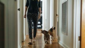 Was tun, wenn dir dein Hund in der Wohnung überallhin folgt