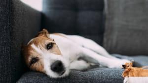 Hundesitter misshandelt Tier aufs Übelste und filmt alles