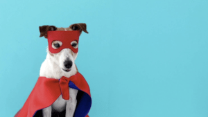 Hunde zu Halloween: Worauf beim Verkleiden zu achten ist
