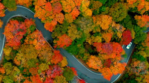 This video of autumnal foliage is so peaceful