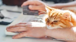 Darum setzen sich Katzen immer auf die Tastatur des PCs