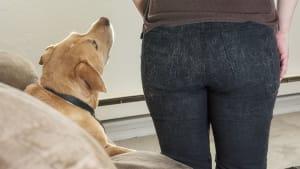 Drei unschlagbare Tricks gegen Hunde- und Katzenhaare
