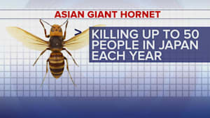 Investigators wipe out Asian giant hornet nest in US