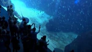 Penguins zip through specialized tunnels inside hotel's ceiling aquarium