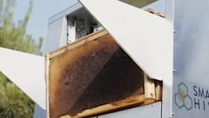 Smart beehive simplifies the honey retrieving process