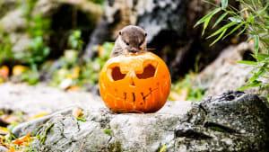 Happy Halloween: So feiern die Tiere im Londoner Zoo