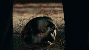 """""""Halloween Kills"""" (OV): Trailer zur Fortsetzung von """"Halloween"""""""