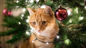 Gefahren in Weihnachtsdeko: So macht ihr eurer Zuhause katzensicher