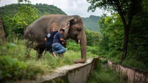 """""""Einsamster Elefant der Welt"""" hat ein neues Zuhause"""