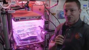 Grüne Daumen auf der ISS: Welche Pflanzen wachsen im All?