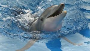 Kampf gegen den unbeabsichtigten Tod von Delfinen